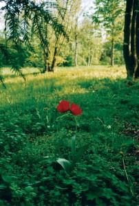 Der aktuelle Themenschwerpunkt für den nächste Nymphenspiegel lautet: Liebe und Eros, beflügelt in den Gärten und am Fluss
