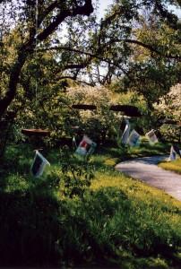 Der erste Nymphenspiegel-Bücherbaum im Botanischen Garten, Mai 2007